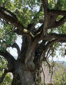 Drveće za sajt