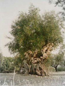 Drvo 300