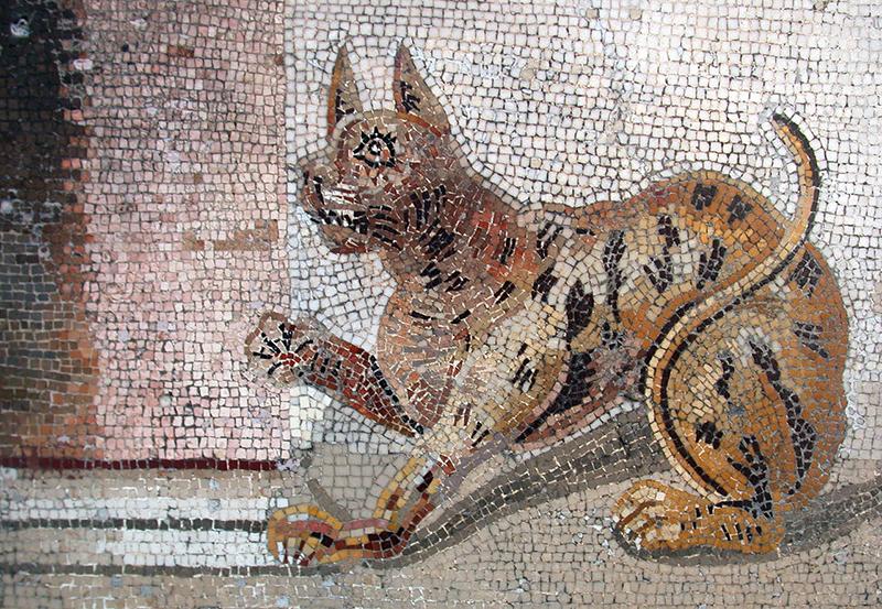 Macka na mozaiku u Pompeji 800
